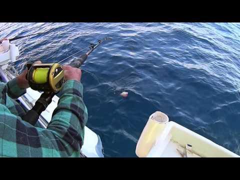 Swains Reef 2016