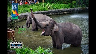 Amazing Jurong Bird Park | Singapore Zoo | Night Safari | Travel Singapore 2019