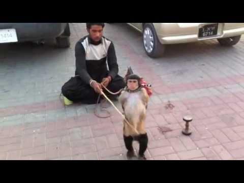 Pakistan Bujo kotli kashmir