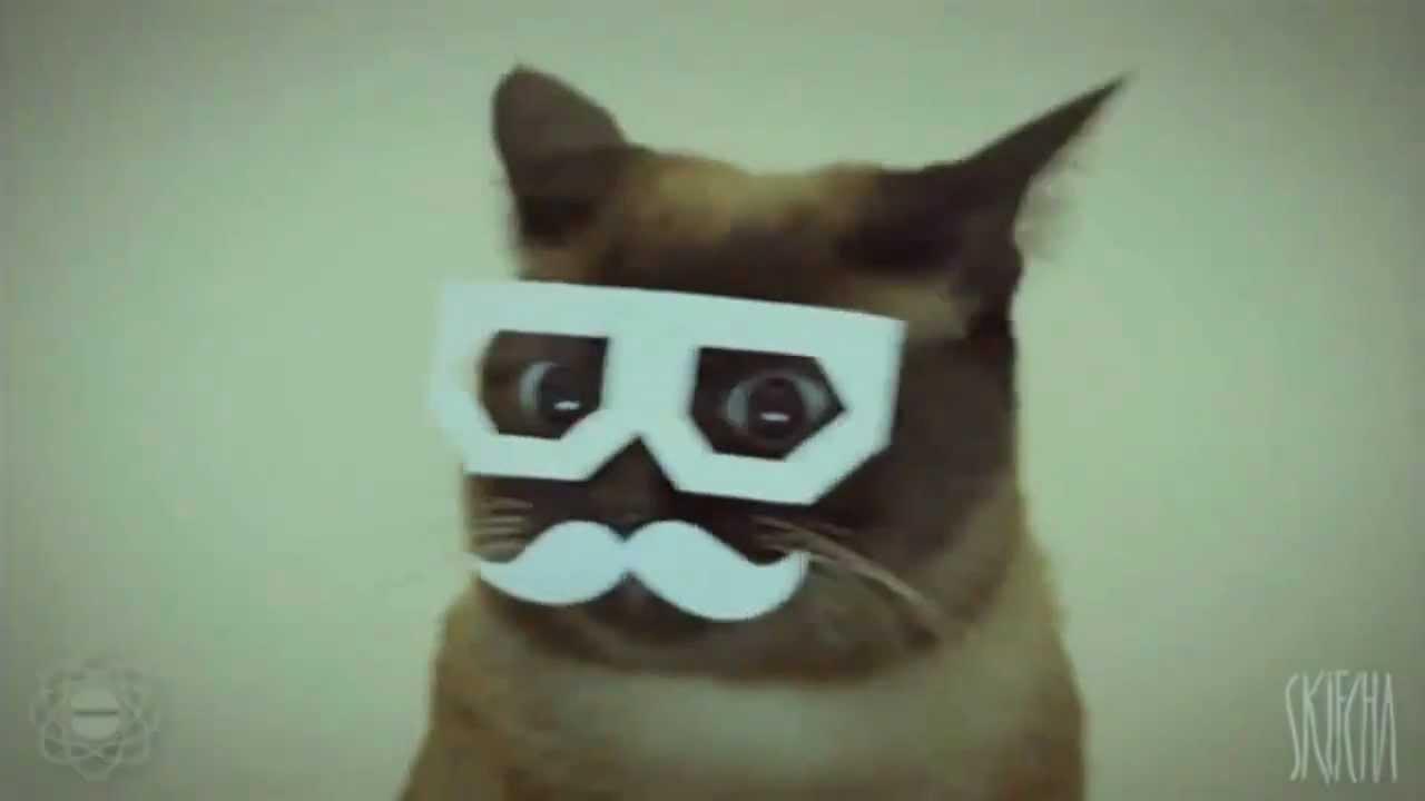 Gangnam Style Cat Style