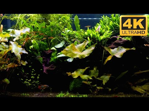AMAZING 4K ULTRA HD AQUARIUM VIDEO for TV from YouTube · Duration:  20 minutes 2 seconds