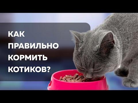 Как и чем лучше кормить кошку
