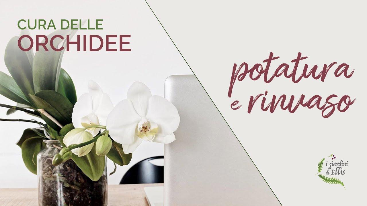 Download ORCHIDEE - potatura e rinvaso
