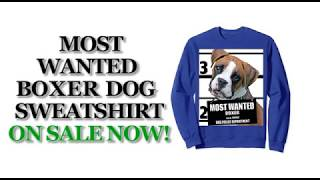 Most Wanted Boxer Cute Funny Dog Sweatshirts - Men's, Women's, Kid's - Black, Blue, Dark Heather