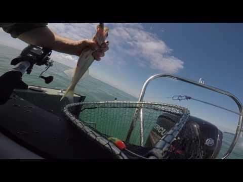 Lake Erie Fishing 15 July 2017
