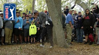 Tiger Woods' brilliant par save from the trees at Valspar