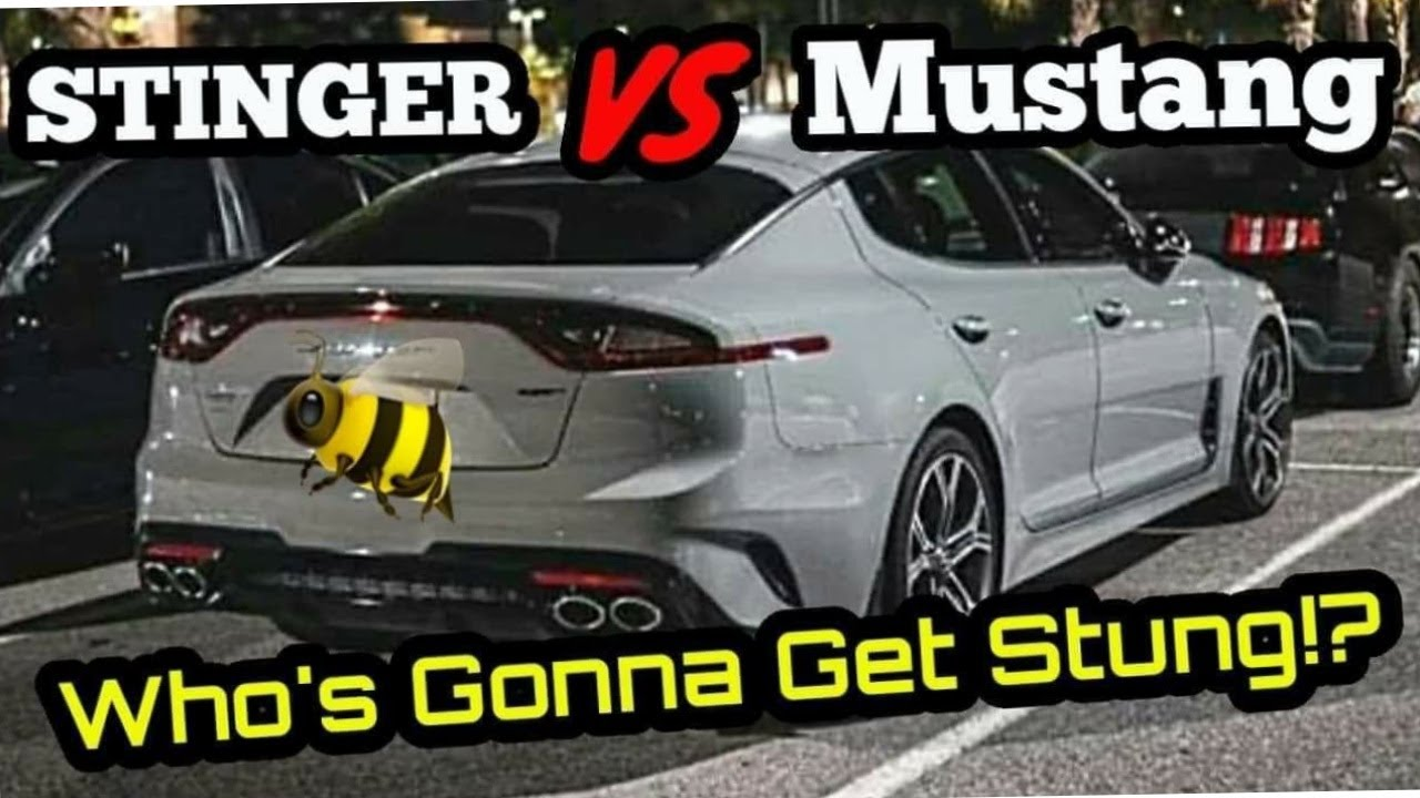 KIA STINGER RACES A COYOTE MUSTANG & BIG TURBO GTI! Who will BEE Victorious?!  + RS3 VS Supra!