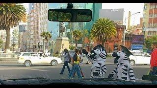 ボリビアのラパス 楽しそうなデモ隊やゼブラゾーンのゼブラ君たち なん...