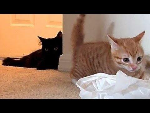 A Kitten A Cat & A Bag...