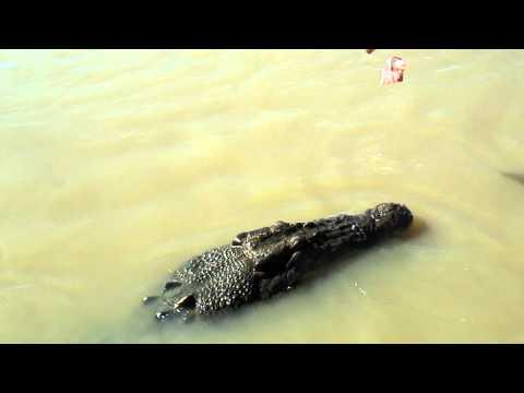 Day 23 - 3 June 042 Croc Clip.MOV