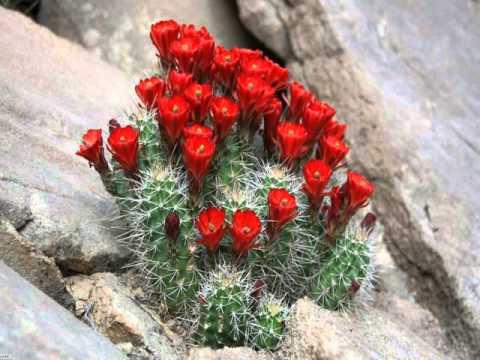 кактусы и их виды