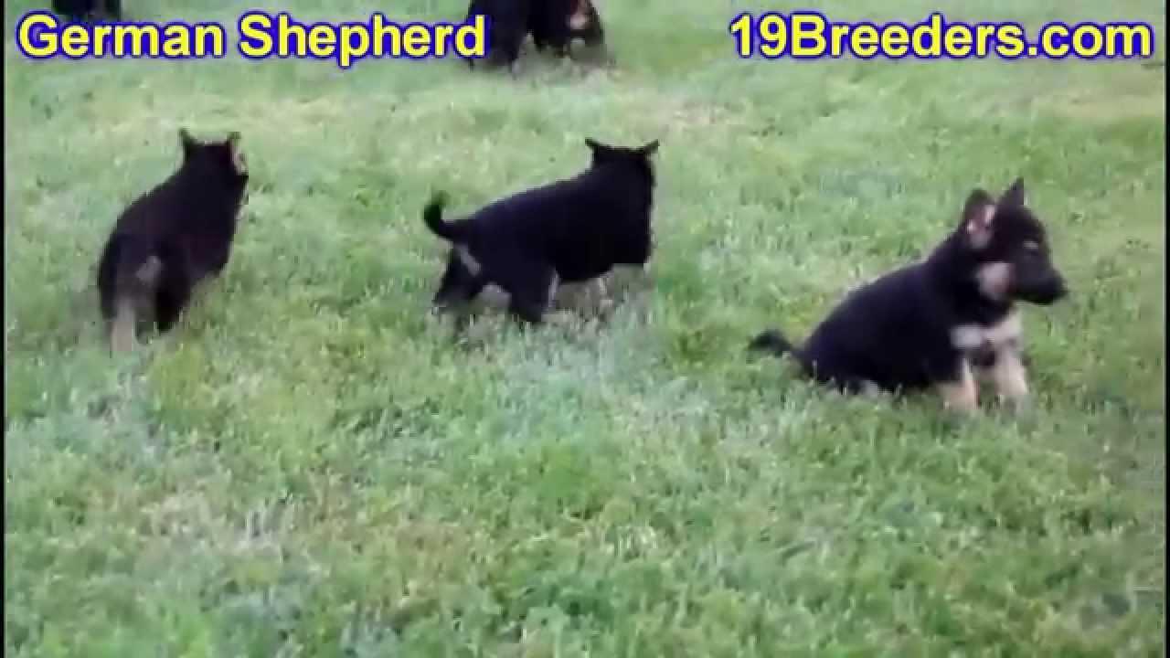 German Shepherd Puppies For Sale In Meridian Idaho County Id
