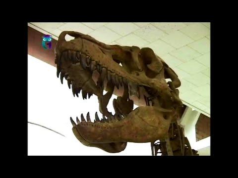Палеонтологический музей. Мезозой, динозавры и их современники