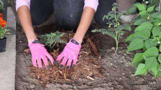 How to Use Cedar Mulch on Veggie Plants : The Chef's Garden
