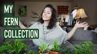 My Fern Collection | House Plants 2018