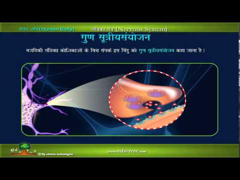 human body  nervous system IN HINDI by edutreeHD
