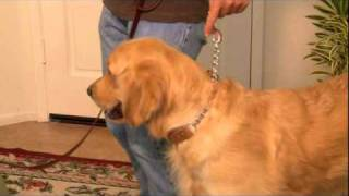 The Alternative Training Collar | Recommended Collar By Professional Dog Trainer Joel Silverman
