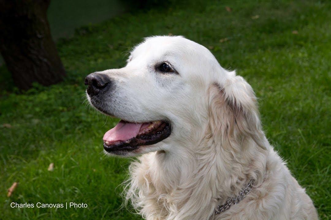 Que raza de perros escoger para casa con ni os o mayores youtube - Perros para tener en casa ...
