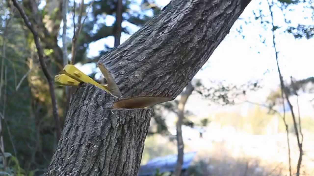ハスクバーナーチェンソー・ドシロートが木を安全確実に伐採 ...