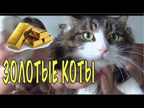 золотые коты! зачем нам это надо? СКОЛЬКО СТОИТ ПЕРЕВОЗКА КОТОВ МОСКВА-МАЙАМИ. . Olga Lastochka