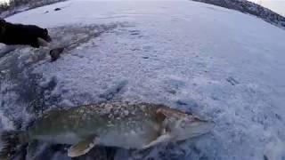 Нестандартная рыбалка ,или как я ловил щуку на озере Добрино.