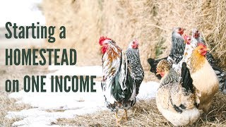 Starting a HOMESTEAD on ONE Small Income