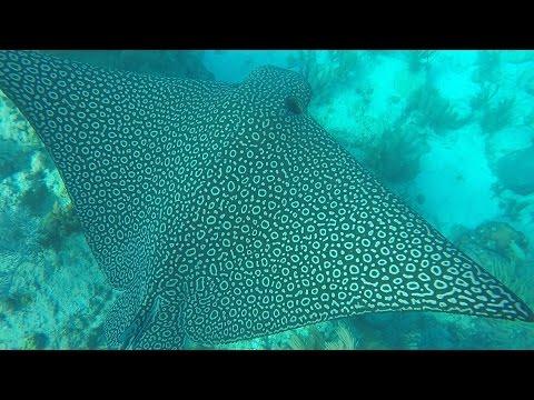 Gopro snorkeling video at Looe Key Reef in the Florida Keys