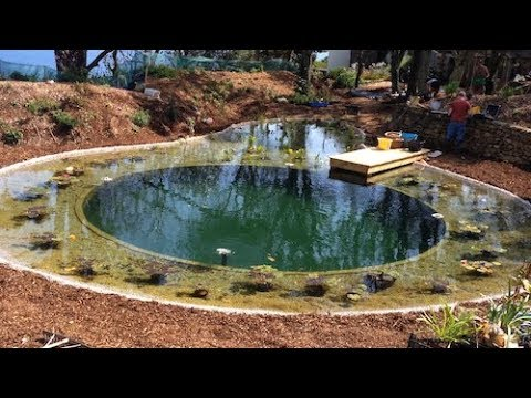 DIY Organic Pool vs. Commercial installation