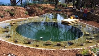 Diy Organic Pool Vs Commercial Installation Youtube