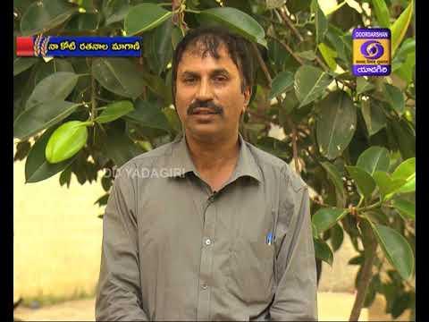 నా కోటి రతనాల మాగాణి || Dt : 20-07-2020  || 05.00 Hrs