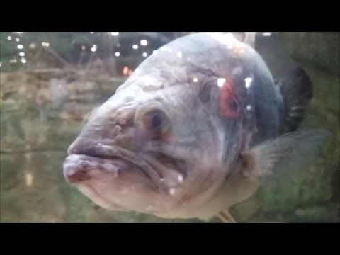 I FOUND THE BIGGEST BASS OF MY LIFE....BUT