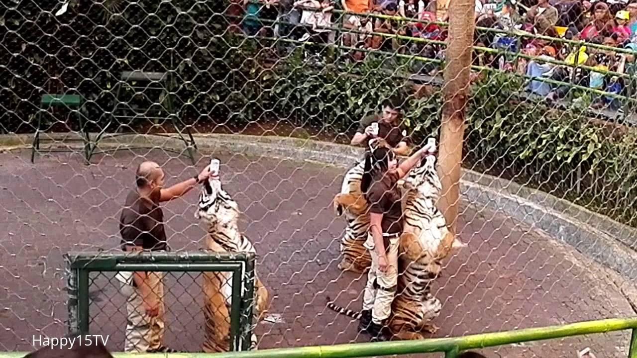 Taman Safari Indonesia Bogor Terbaru Tiger Show Harga Tiket Masuk Ada Di Description Vlog