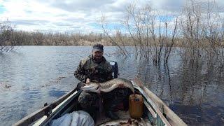 Рыбалка на Севере,открытие сезона по жидкой воде.(Рыбалка на Севере,наконец то выбрался отдохнул отлично по рыбалил прилично., 2016-06-07T04:43:21.000Z)