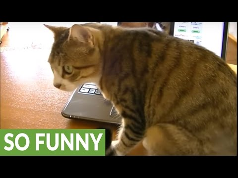 Cat tries to save meowing kitten from inside laptop