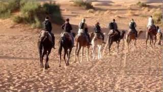 Sahara, Maroko - Wielbłądy