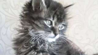 Вакцинация котенка Лили. Новая вет. клиника. Зоомагазин