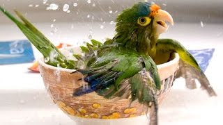 Funny Parrots A Funny Parrot Videos Compilation 2015