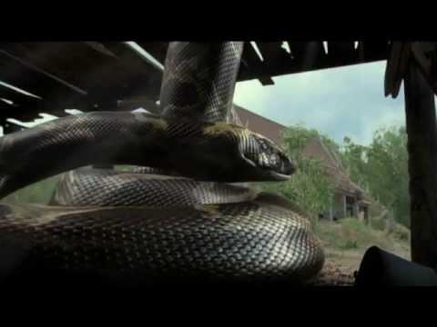 โบอางูยักษ์ Boa เบื้องหลัง