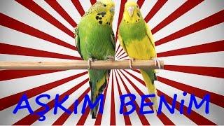Papağan Muhabbet Kuşu AŞkim Benİm Konuşma Eğitim Sesi Hazır Ses Kaydı 1 Saat