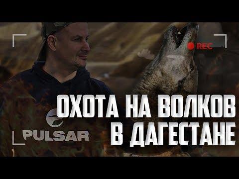 Охота на волка в Дагестане. Выстрел по волку с отвесной скалы.  Волк на дне ущелья.