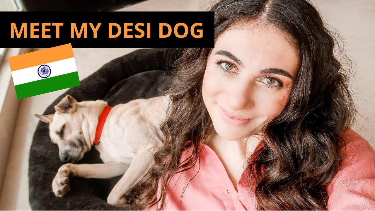 I adopted an Indian street dog, MASSIVE life change | Foreigner in India Vlog | TRAVEL VLOG IV