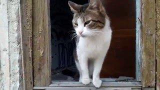 Покормил больного кота / Feed a sick cat