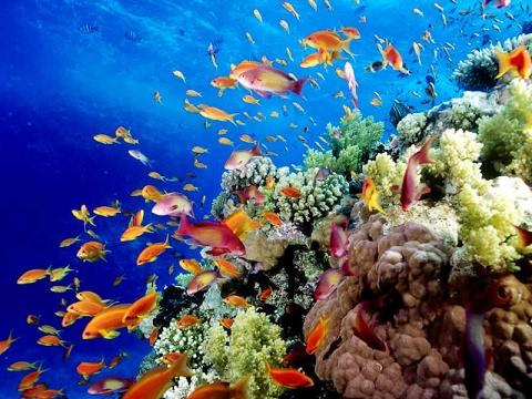 Australia's Great Barrier Reef: Biodiversity and Marine Life
