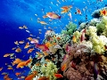 Australia's Great Barrier Reef: Biodiversity and Marine Life Threatened