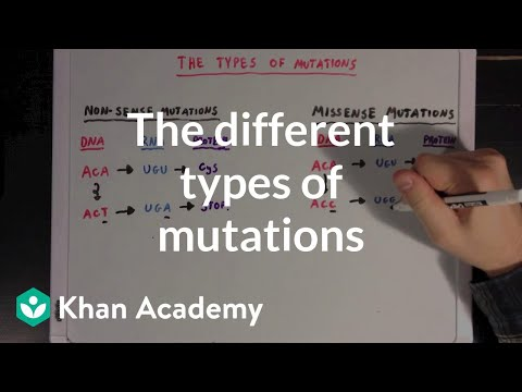 The different types of mutations | Biomolecules | MCAT | Khan Academy