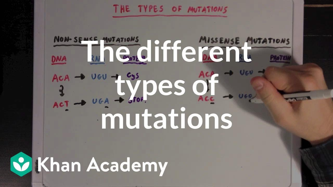 The different types of mutations (video) | Khan Academy