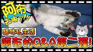 【Bonnie】阿布在哪裡?! - 貓咪的私生活│第二彈Qu0026A ! 回覆影片留言特輯 ! !
