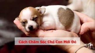 Cách chăm sóc chó c๐n mới đẻ Kỹ thuật chăm sóc chó sơ sinh