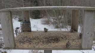 January Bird Table