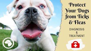 STINK BREATH???  How Get Rid of Doggie Breath | DOG HEALTH 🐶 Brooklyn's Corner